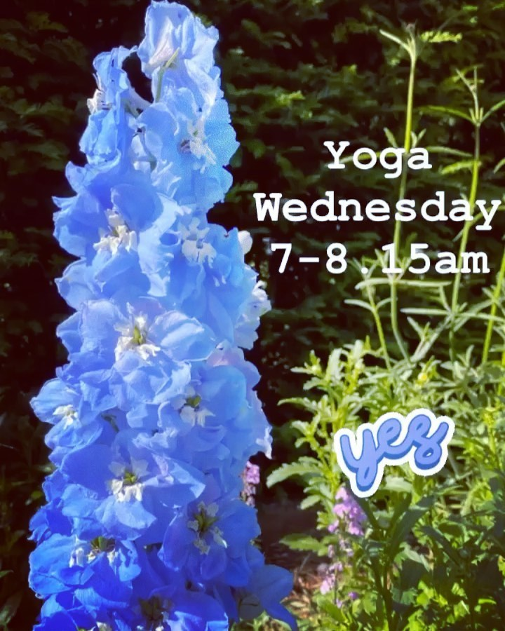 Oxford Yoga - Tall Blue Flower