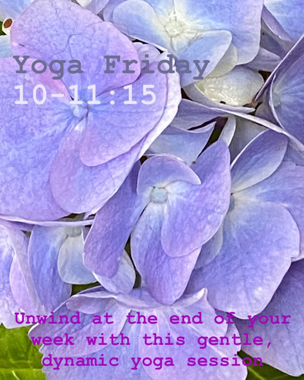 Oxford Yoga - Blue Petals